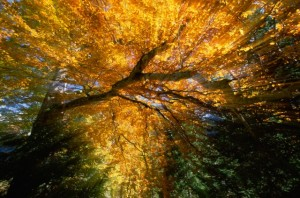 Golden-colored autumn foliage, abstract