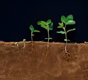 Developmental Stages of Soybean Plants